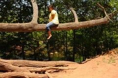 Woman On Tree Limb. Woman high above the ground resting on a tree limb stock photos