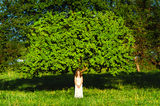 Woman and tree Royalty Free Stock Image
