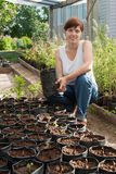 Woman with trees seedlings Stock Photo