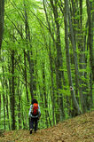 Woman trekking in a beech forest Stock Image