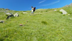 Woman trekking in idyllic mountain landscape on footpath crossing blooming green meadow set amid high altitude rocky mountain rang stock footage