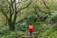 Woman trekking in green suntropical forest Stock Photo