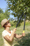 Woman trimming the apple tree Royalty Free Stock Images