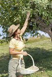 Woman trimming the apple tree Stock Photography
