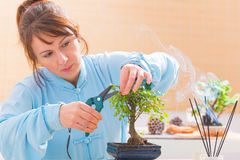 Woman trimming bonsai tree Royalty Free Stock Image