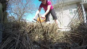 Woman trimming grasses. With hedge trimmer stock video