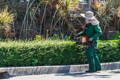 Woman Trimming Hedge with Trimmer Machine Stock Photo
