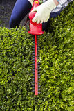 Woman trimming hedges with power shears Royalty Free Stock Images