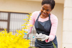 Woman trimming plants Stock Images