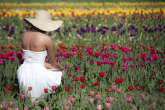 Woman in Tulip field. A woman in a white dress and wide brimmed hat kneels in a peaceful tulip field Royalty Free Stock Image