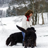 Woman with two big water-dogs in snow Stock Photo