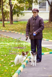 Woman with two dogs Stock Photography