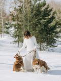 Woman two dogs husky winter snow forest royalty free stock images