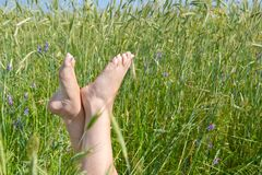 Woman two legs in green grass field under blue sky Royalty Free Stock Photo