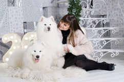 Woman with two samoyeds Stock Images