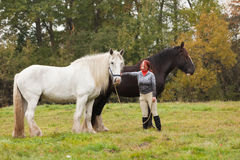 Woman with two shire horses Royalty Free Stock Photo