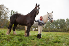 Woman with two shire horses Royalty Free Stock Image