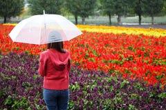 Woman with Umbrella at Tomita Lavender Farm, Hokkaido Stock Image