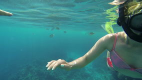 Woman underwater with fishes behind stock video footage
