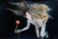Woman underwater Royalty Free Stock Photography