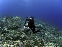 Woman Underwater Photographer Scuba Diving. On a reef in Kona stock photos