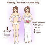 Woman in underwear and Sheath wedding dress. Infographic of Sheath or Column wedding dress that fits for female body shape types. Illustration of woman in Stock Images