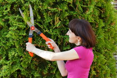 Woman uses gardening tool to trim bushes, seasonal trimmed bushes Royalty Free Stock Photo