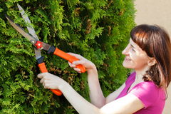 Woman uses gardening tool to trim bushes, seasonal trimmed bushes Royalty Free Stock Photography