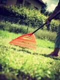 Woman using rake to clean up garden lawn royalty free stock photography