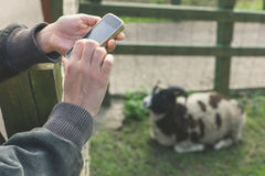 Woman using smart phone on farm Stock Photos