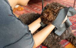Woman using a carbon towel on a dog