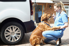 Woman With Van Running Dog Walking Service Stock Photography