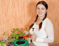 Woman with various seedlings Stock Photo
