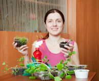 Woman with various seedlings Stock Photos