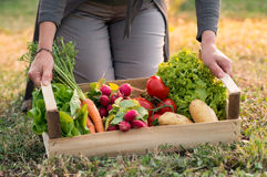 Woman With Vegetable Crate Stock Image
