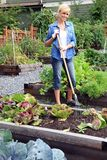 Woman vegetable garden Royalty Free Stock Image