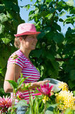Woman in vegetable garden Stock Image