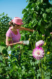 Woman in vegetable garden Stock Photo