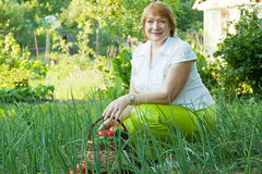 Woman in vegetables garden Stock Photography