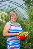 Woman with vegetables in a greenhouse Stock Image