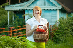 Woman with vegetables harvest Stock Image