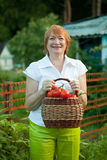Woman with vegetables harvest Royalty Free Stock Image