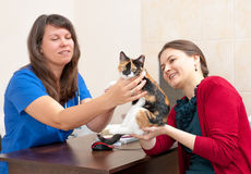Woman vet consults cat owner Royalty Free Stock Photography