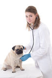 Woman vet doctor checking dog with stethoscope isolated on white Stock Photo