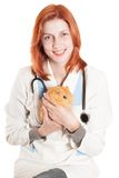 Woman vet with a guinea pig in his hands Royalty Free Stock Photos