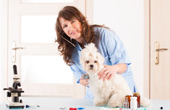 Woman vet holding a dog Royalty Free Stock Photography