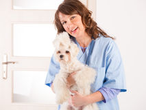 Woman vet holding a dog Royalty Free Stock Images