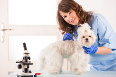 Woman vet holding a dog Royalty Free Stock Image