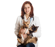 Woman vet with pets. On a white background isolated royalty free stock photography