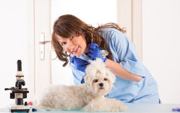 Woman vet with a small dog Royalty Free Stock Photography